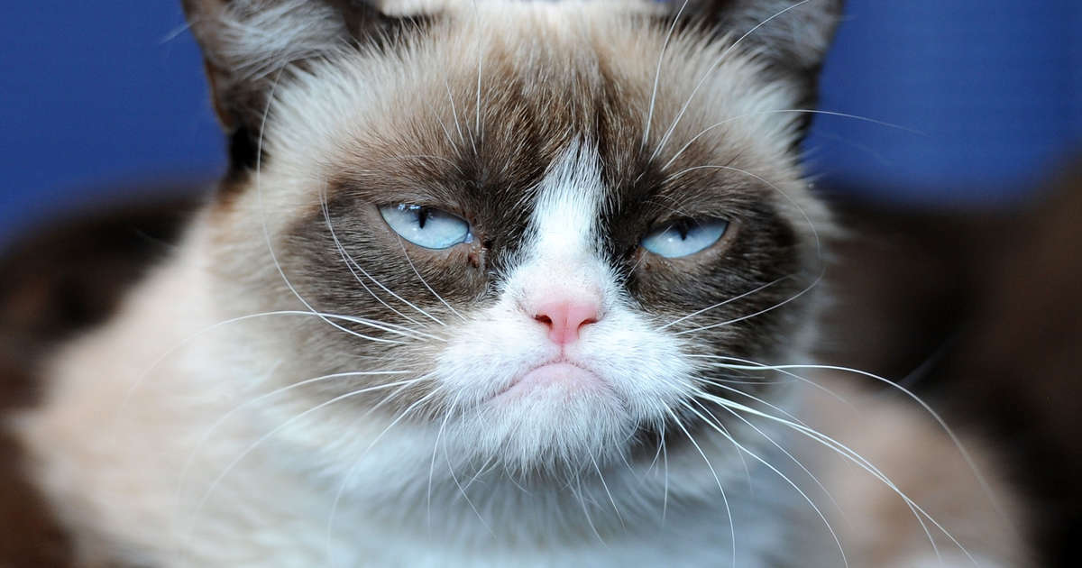 Best Grumpy Cat Memes of All Time: Remembering the Cat ...