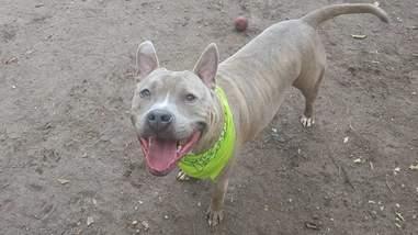 dog in shelter 981 days