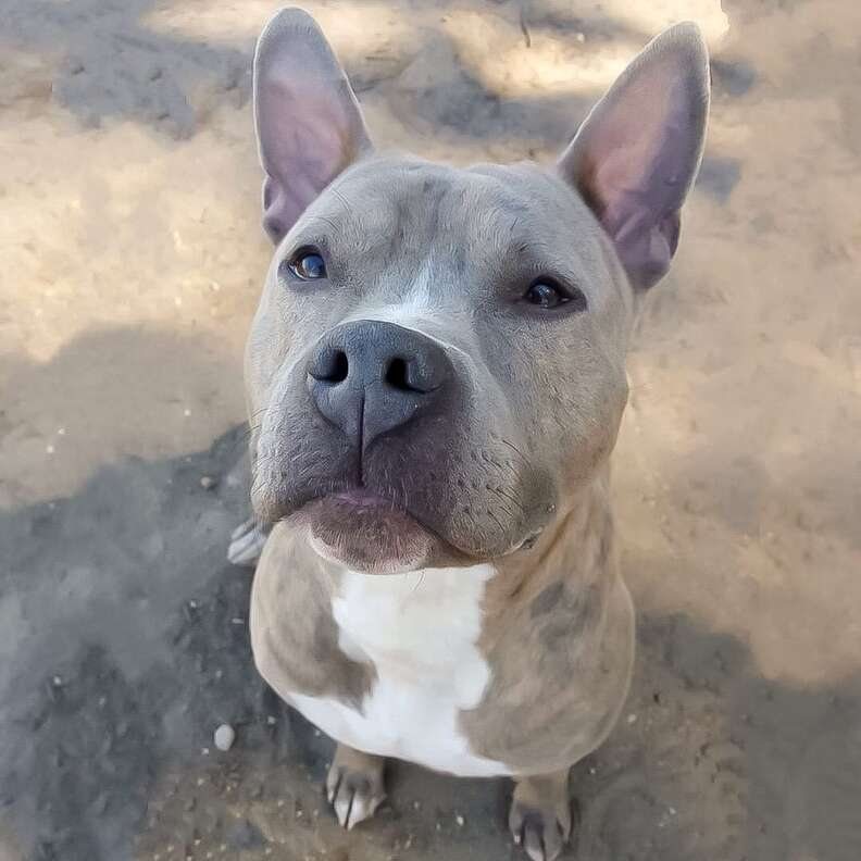 dog in shelter for 981 days