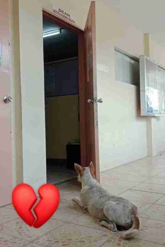 Stray dog waits for his friend outside the faculty office