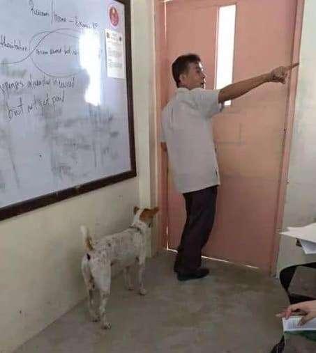 Dog follows professor around college