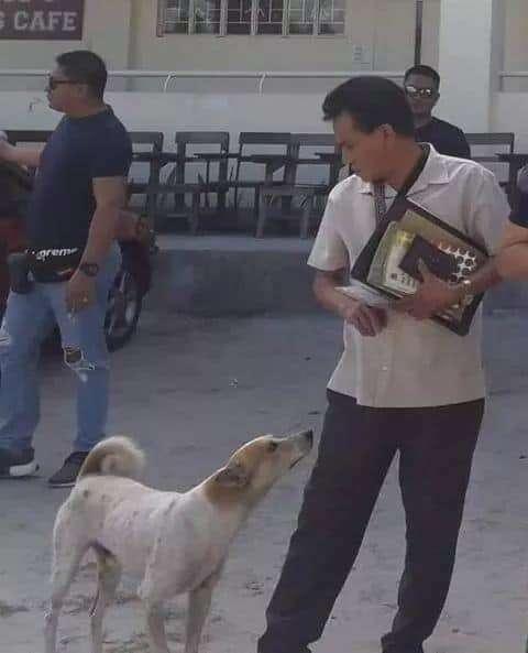 Stray dog loves his professor friend