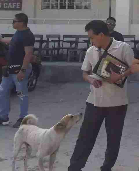 Stray dog loves his professor friend