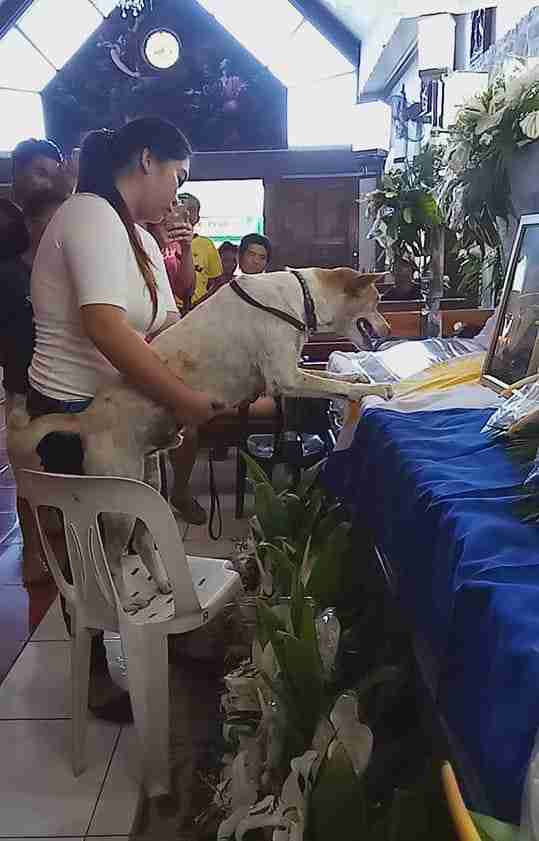 Dog at his owner's funeral