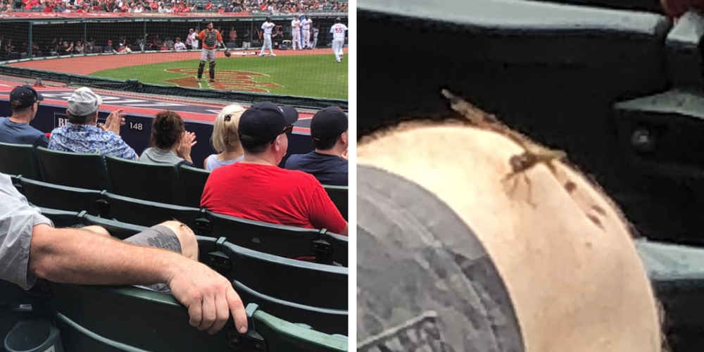 People Are Touched By Man's Act Of Kindness To Dragonfly During Baseball Game