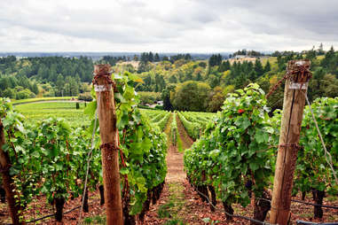 Sure, the Willamette Valley is known for its pinot noir, but expect to find pinot gris, riesling, cabernet franc and 70-plus other varietals.