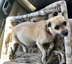 Lizzy the rescue dog on freedom ride