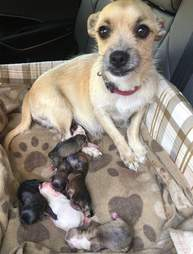 Lizzy the rescue dog with her six puppies