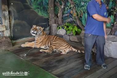 thailand zoo