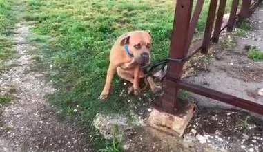 Dog tied to fence at New Orleans rescue center