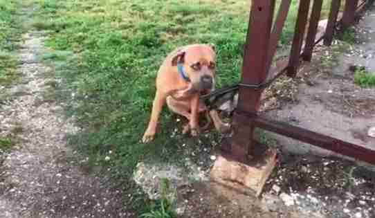 Dog Found Tangled Up In His Leash With The Saddest Note