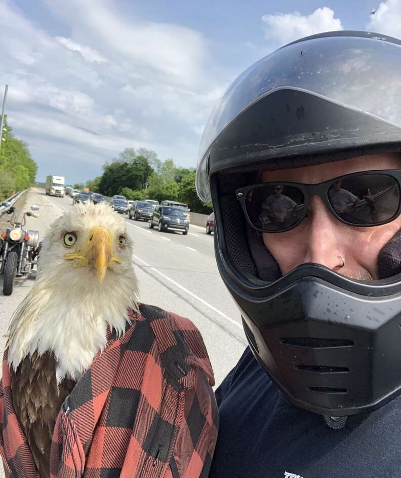 Guy rescues bald eagle from highway