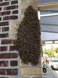 20,000 bees