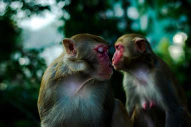 Close-Up Of Monkeys