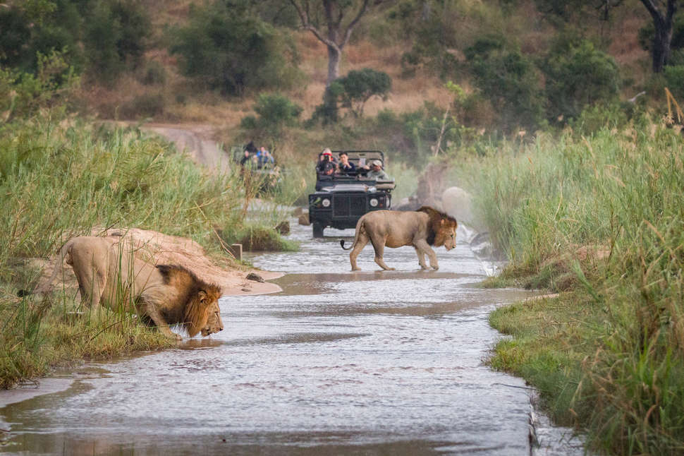 How to Go on a Cheap African Safari Trip: Tips for an