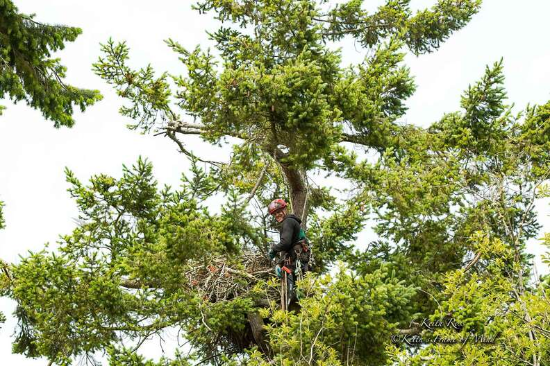 Guy returns eaglets to nest