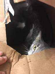 cats found in taped up boxes