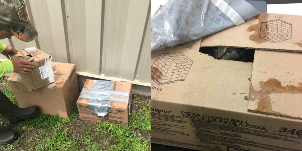 People Find 3 Taped-Up Boxes Outside Shelter And Can't Believe Who's Inside