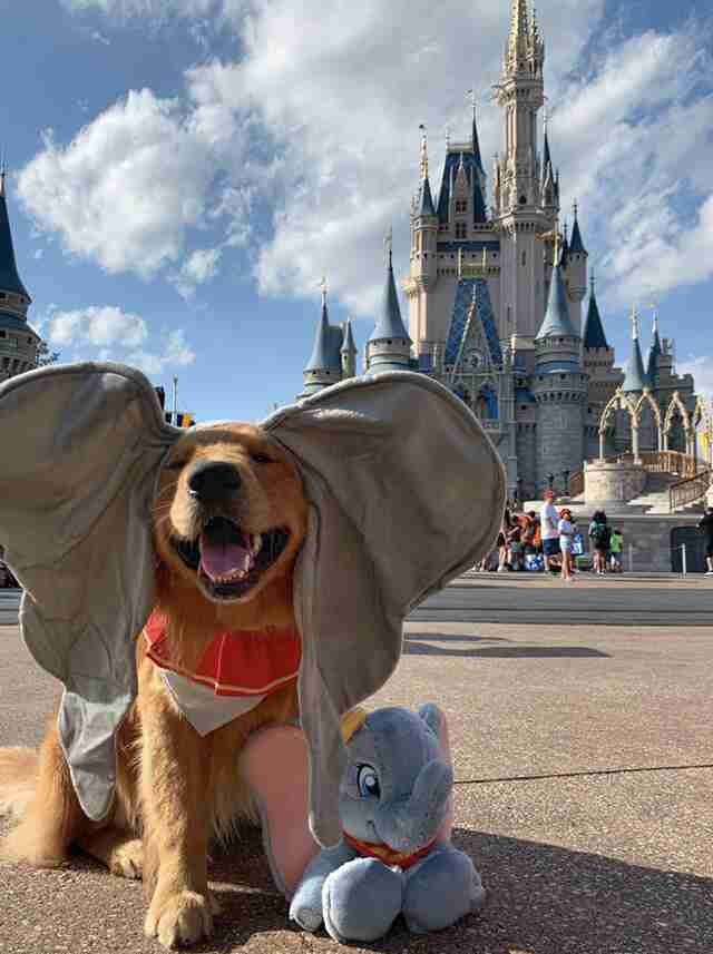 service dog goes to disney