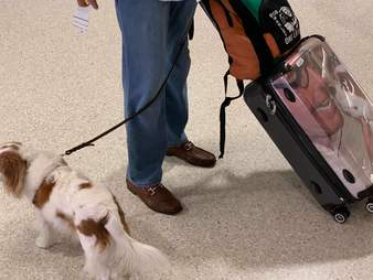 Custom luggage with dog's face on it