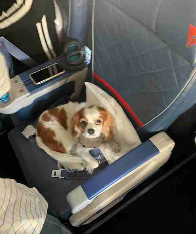 Dog gets her own first class seat on plane