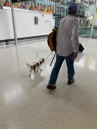 Pampered dog flies first class