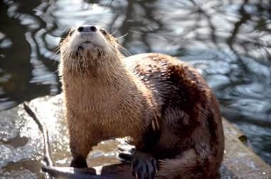 otter death