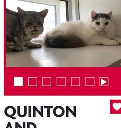 Toby and Quinton up for adoption at the RSPCA