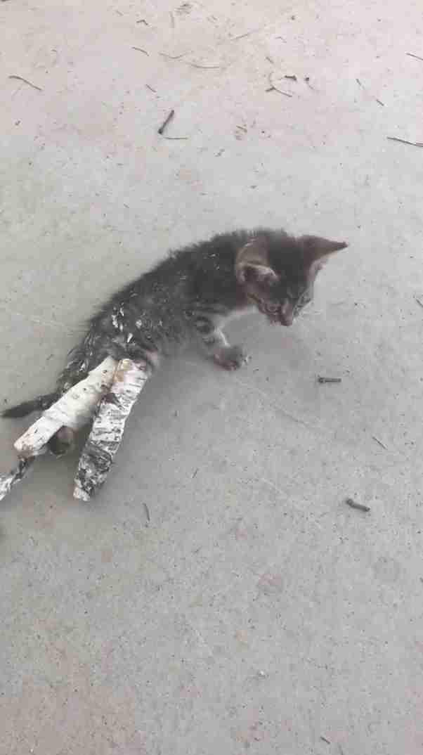 Kids Swoop In To Save Kitten On Sidewalk In Casts