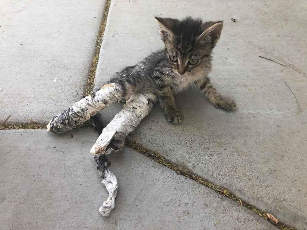 Kitten Wearing Casts Found Abandoned On Sidewalk - The Dodo