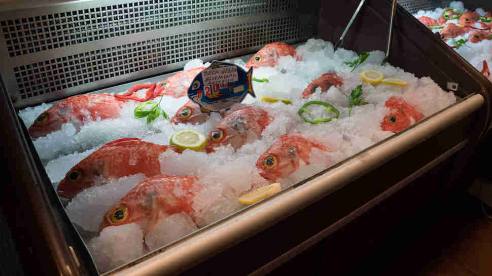 rockfish for sale on display