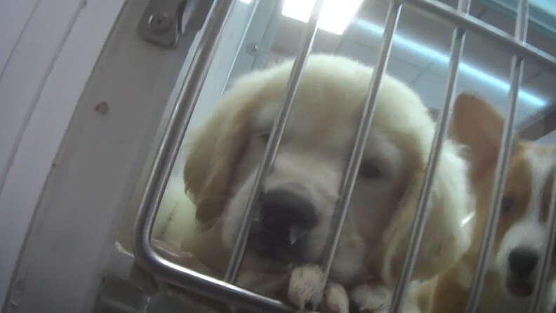 A sick puppy at the Georgia Petland