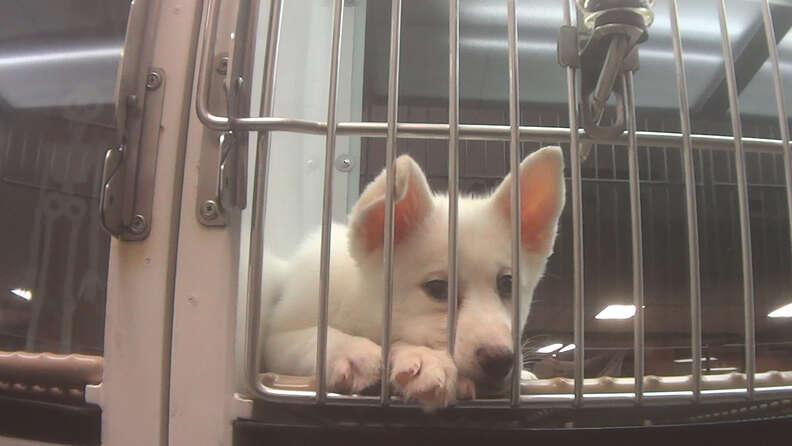 A puppy at Petland