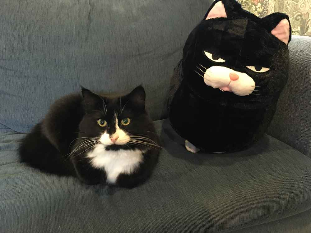 Cat Meets Pillow Who Looks Just Like Him And Falls Madly In Love