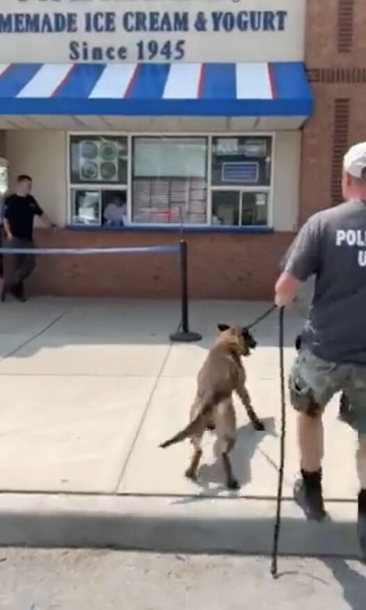 police dog gets ice cream