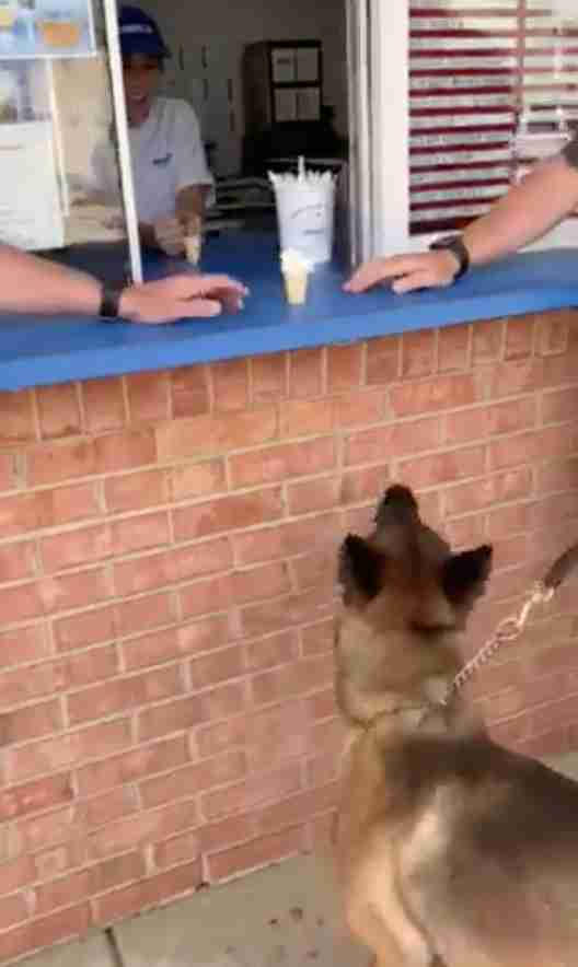 police dog gets ice cream