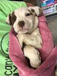 dumpster puppy