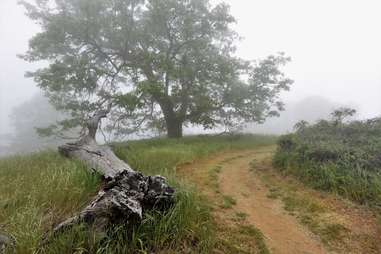 Volcan Mountain Trail