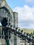 Hagrid roller coaster
