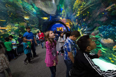 Coral Reef Tunnel