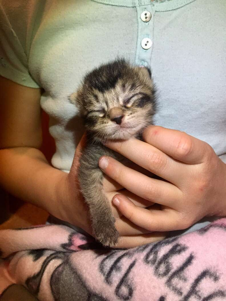 Nala the week-old kitty found in an alley