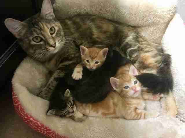 Nala the kitten with her adoptive cat family