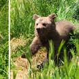 Baby bear saved from basement in Kosovo