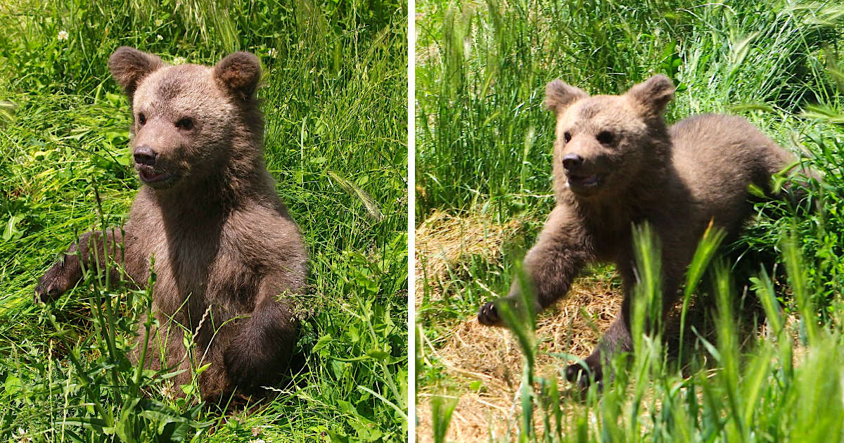 Baby Bear Gets Adorably Overwhelmed By His Sudden Good Luck