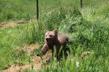 Bear cub saved from basement in Kosovo