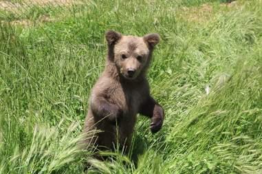 Bear cub liberated from Kosovo basement