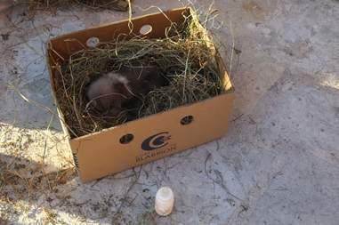 Bear cub mistaken for puppy in Kosovo
