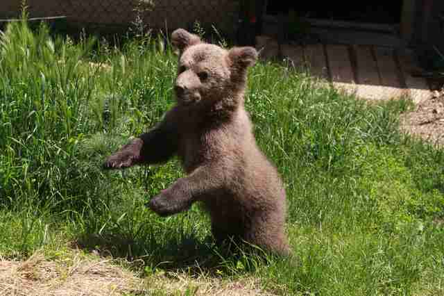 Bear cub saved from basement