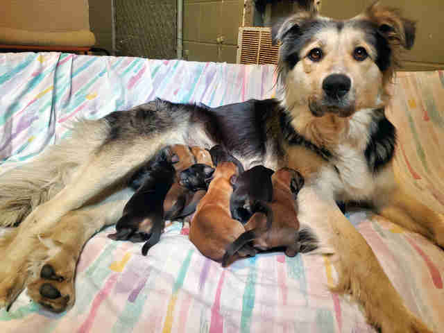 mother dog and puppies