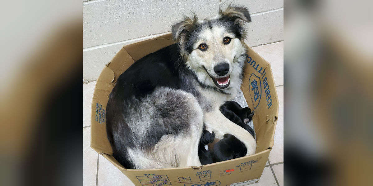 Image result for Mama Dog Found Abandoned And Sealed In A Box Along With Her 9 Puppies